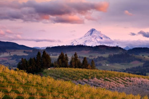 Off the Beaten Path - Oregon regional packages