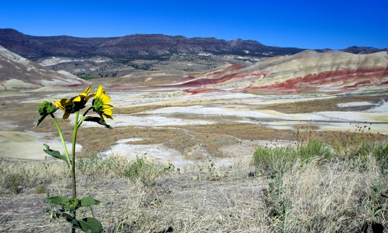 Painted Hills in the John Day Fossil Beds