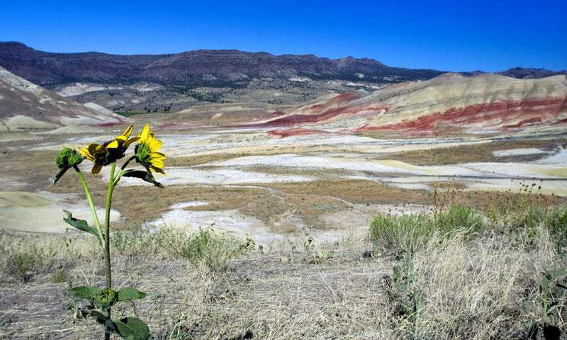 The Painted Hills Oregon Alltrips