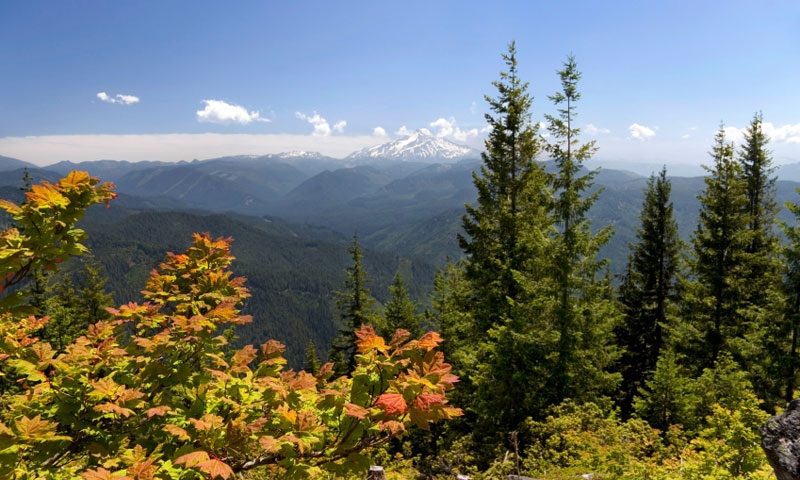 Willamette National Forest with Mount Jefferson