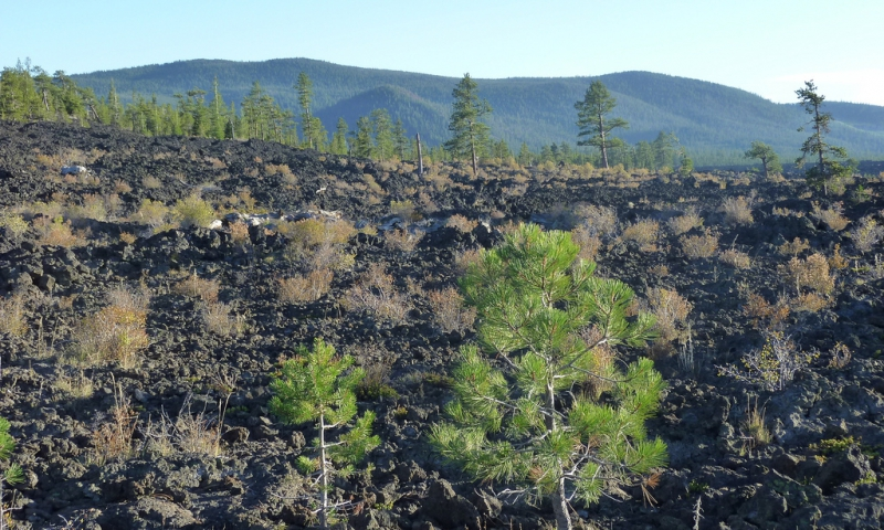 Lava Cast Forest in Newberry Volcanic Monument
