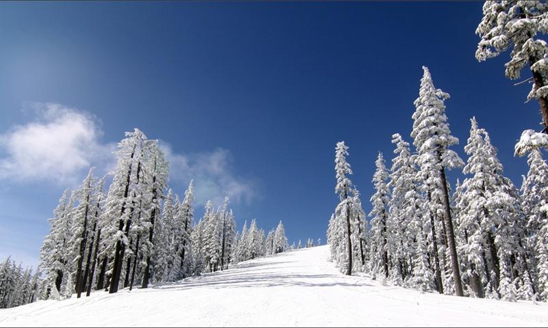 Willamette Ski Area