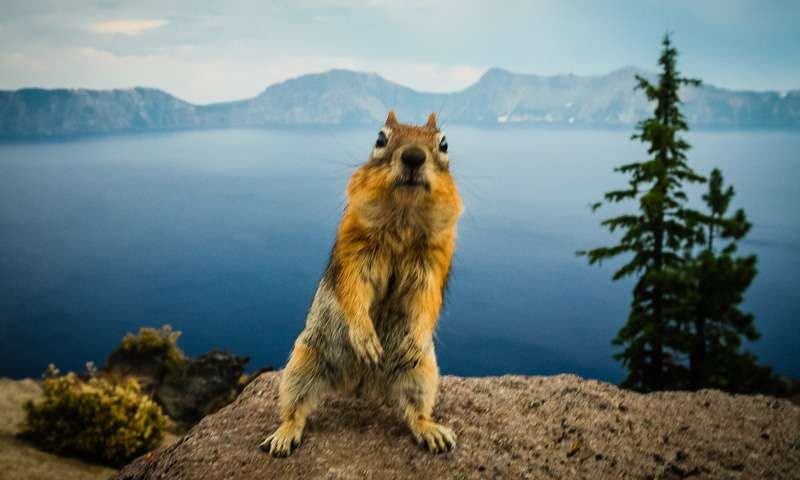 Crater Lake Animals