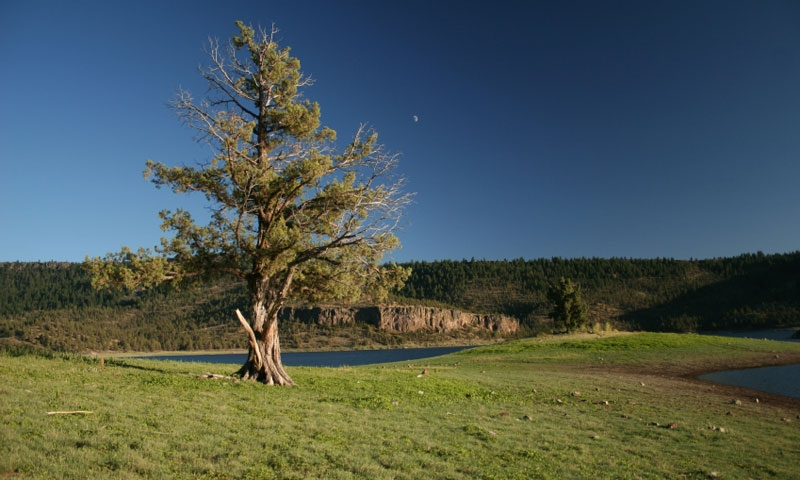 All prineville oregon or vacations real estate lodging for Prineville reservoir fishing