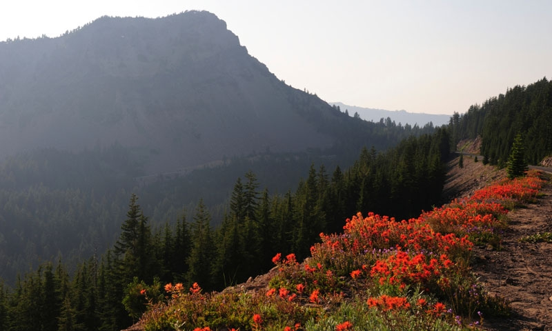 Indian Paintbrush along a trail in Crater Lake National Park