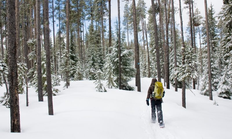 Bend Snowshoe Trails